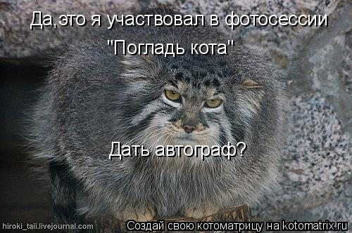 """Котоматрица: Да,это я участвовал в фотосессии  """"Погладь кота"""" Дать автограф?"""