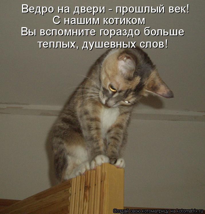 Котоматрица: Ведро на двери - прошлый век! С нашим котиком Вы вспомните гораздо больше теплых, душевных слов!