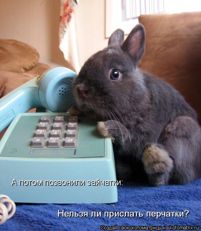 Котоматрица: А потом позвонили зайчатки: Нельзя ли прислать перчатки?