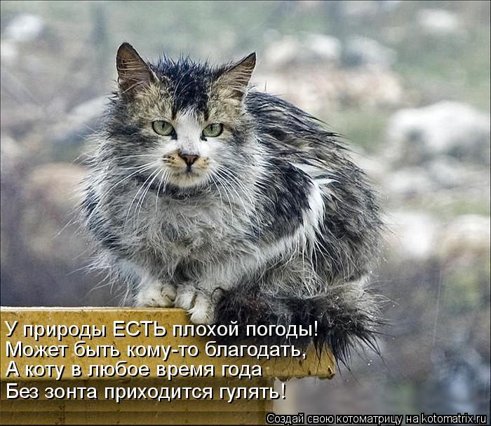 Котоматрица: У природы ЕСТЬ плохой погоды! Может быть кому-то благодать, А коту в любое время года Без зонта приходится гулять!