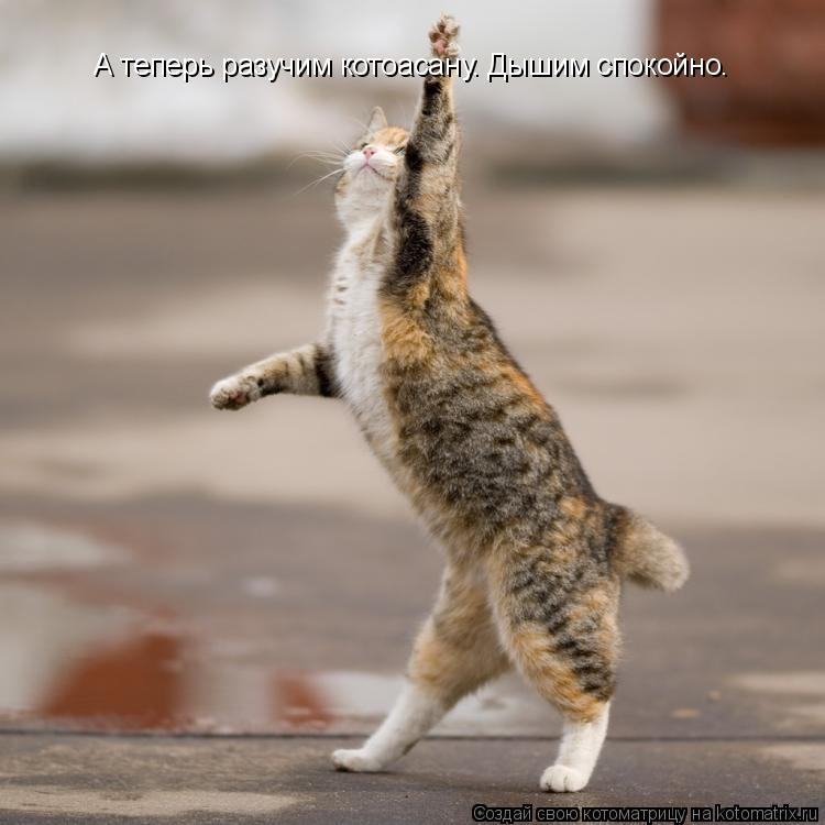 Котоматрица: А теперь разучим котоасану. Дышим А теперь разучим котоасану. Дышим спокойно.