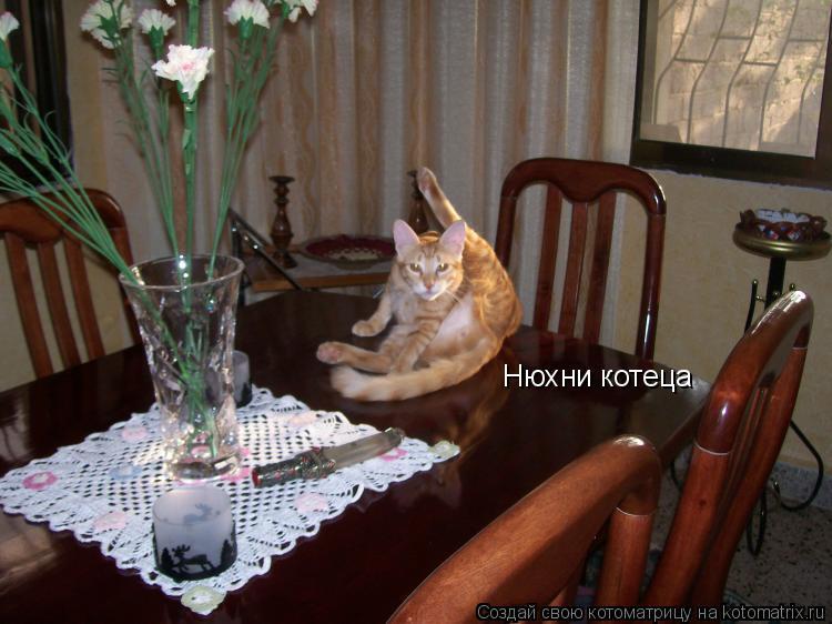 Котоматрица: Нюхни котеца