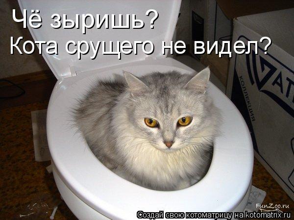 Котоматрица: Чё зыришь? Кота срущего не видел?
