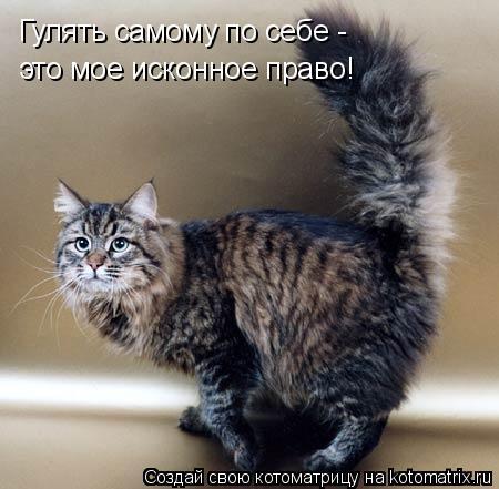Котоматрица: Гулять самому по себе -  это мое исконное право!