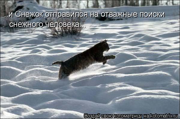 Котоматрица: ..и Снежок отправился на отважные поиски снежного человека...