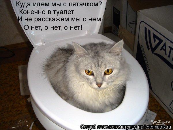 Котоматрица: Куда идём мы с пятачком? Конечно в туалет И не расскажем мы о нём О нет, о нет, о нет!