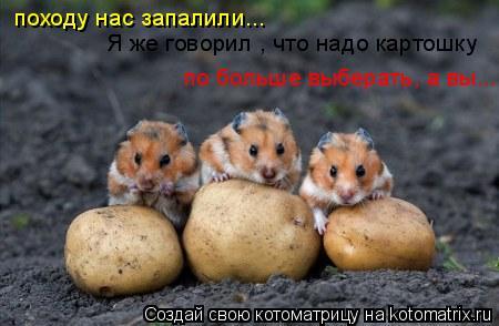 Котоматрица: походу нас запалили... Я же говорил , что надо картошку  по больше выберать, а вы... по больше выберать, а вы...