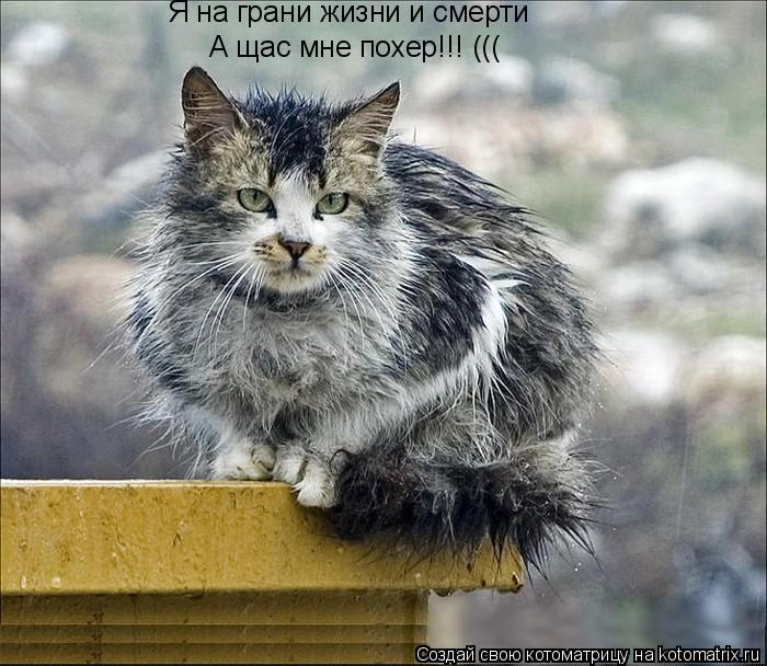 Котоматрица: Я на грани жизни и смерти А щас мне похер!!! (((