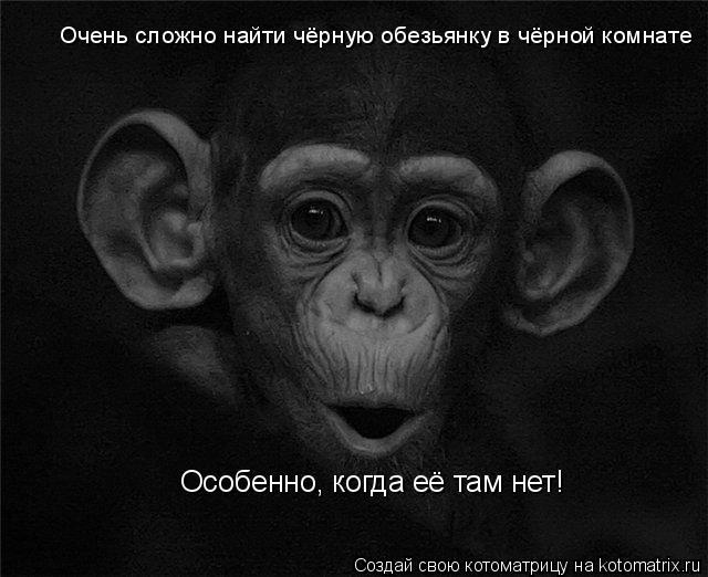 Котоматрица: Очень сложно найти чёрную обезьянку в чёрной комнате Особенно, когда её там нет!