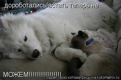Котоматрица: дороботались!встать теперь не МОЖЕМ!!!!!!!!!!!!!!!!!