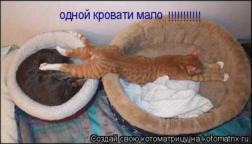 Котоматрица: одной кровати мало  !!!!!!!!!!!