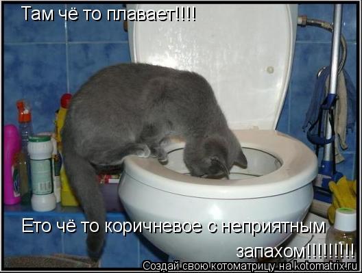 Котоматрица: Там чё то плавает!!!!  Ето чё то коричневое с неприятным запахом!!!!!!!!!