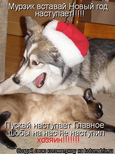 Котоматрица: Мурзик вставай Новый год наступает!!!!! Пускай наступает Главное шобы на нас не наступил хозяин!!!!!!!