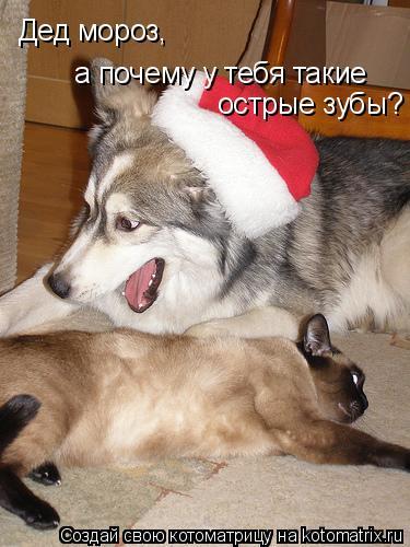 Котоматрица: Дед мороз, Дед мороз, а почему у тебя такие  острые зубы?