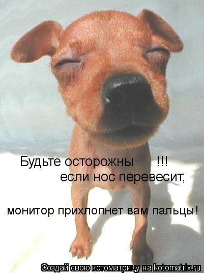 Котоматрица: Будьте осторожны      !!! если нос перевесит, монитор прихлопнет вам пальцы!