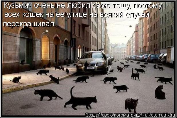 Котоматрица: Кузьмич очень не любил свою тещу, поэтому всех кошек на ее улице на всякий случай перекрашивал...