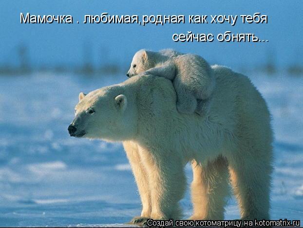 Котоматрица: Мамочка . любимая,родная как хочу тебя  сейчас обнять...