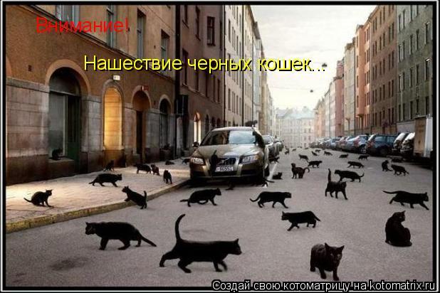 Котоматрица: Внимание! Нашествие черных кошек...