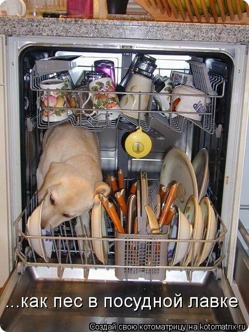 Котоматрица: ...как пес в посудной лавке