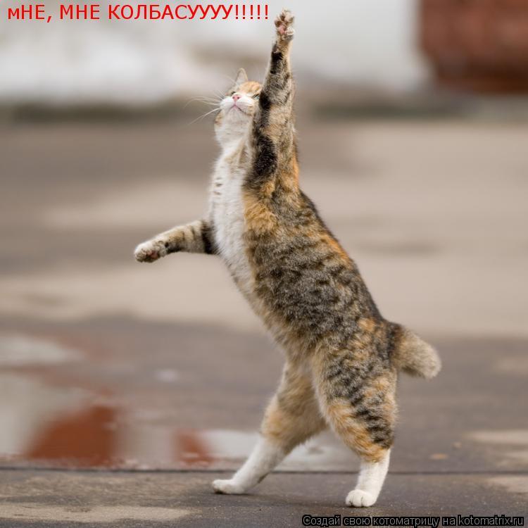 Котоматрица: мНЕ, МНЕ КОЛБАСУУУУ!!!!!