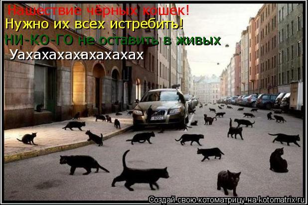 Котоматрица: Нашествие чёрных кошек! Нужно их всех истребить! Нужно их всех истребить! НИ-КО-ГО не оставить в живых Уахахахахахахахах