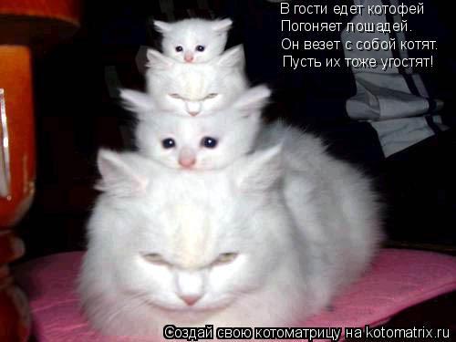 Котоматрица: В гости едет котофей В гости едет котофей Погоняет лошадей. Он везет с собой котят. Пусть их тоже угостят!