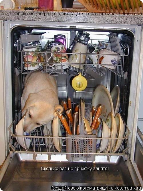 Котоматрица: Сколько можно раз говорить?  Для собак ета мойка. для собак! Сколько раз не прихожу занято! Сколько раз не прихожу занято!