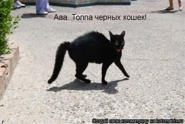 Котоматрица: Ааа. Толпа черных кошек!