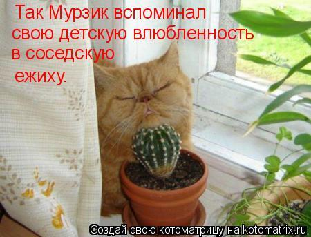 Котоматрица: Так Мурзик вспоминал свою детскую влюбленность в соседскую ежиху.