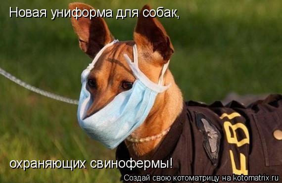 Котоматрица: Новая униформа для собак, охраняющих свинофермы!