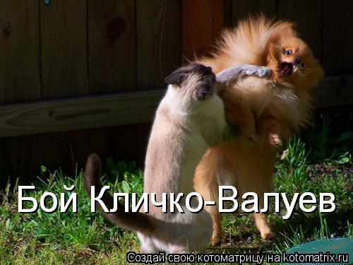 Котоматрица: Бой Кличко-Валуев Бой Кличко-Валуев