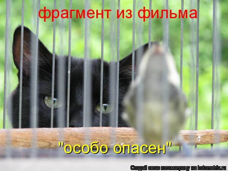 "Котоматрица: фрагмент из фильма ""особо опасен"""