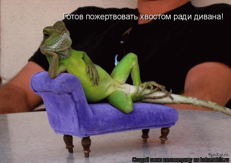 Котоматрица: Готов пожертвовать хвостом ради дивана!