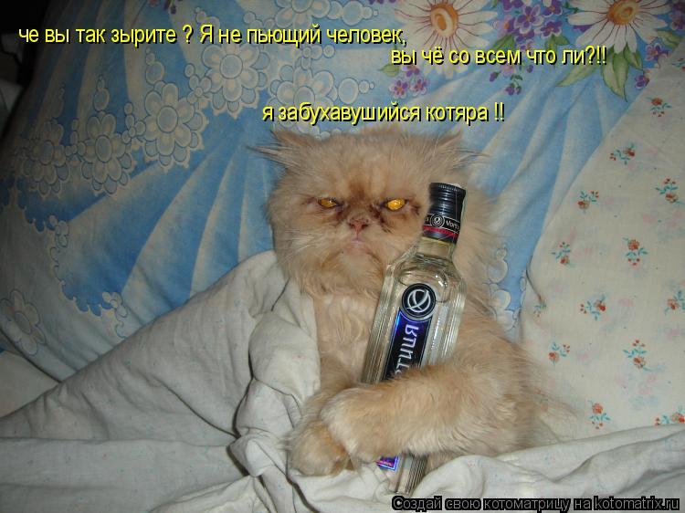 Котоматрица: че вы так зырите ? Я не пьющий человек,  вы чё со всем что ли?!! я забухавушийся котяра !!