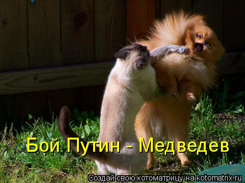 Котоматрица: Бой Путин - Медведев