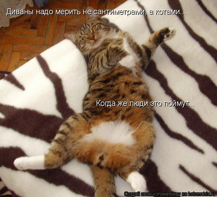 Котоматрица: Диваны надо мерить не сантиметрами, а котами...  Когда же люди это поймут...