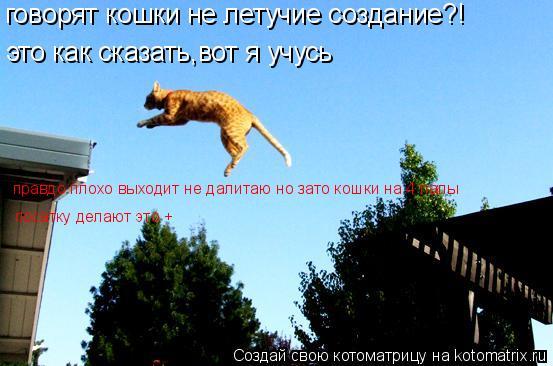 Котоматрица: говорят кошки не летучие создание?! это как сказать,вот я учусь правдо плохо выходит не далитаю но зато кошки на 4 лапы  посатку делают это +
