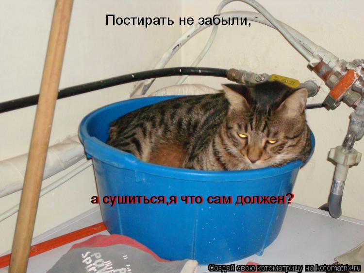 Котоматрица: Постирать не забыли, а сушиться,я что сам должен? а сушиться,я что сам должен?