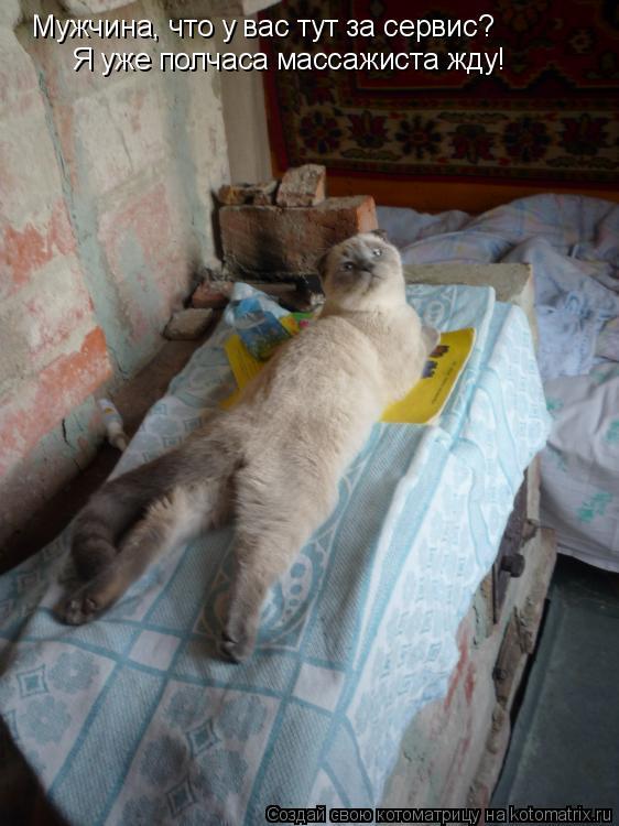 Котоматрица: Мужчина, что у вас тут за сервис?  Я уже полчаса массажиста жду!