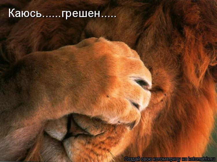 Котоматрица: Каюсь......грешен.....