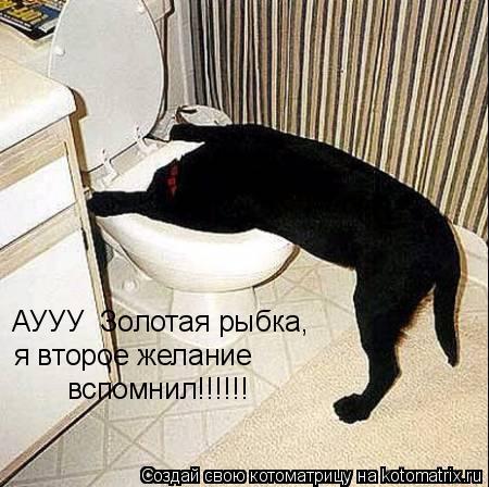 Котоматрица: АУУУ  Золотая рыбка, я второе желание  вспомнил!!!!!!