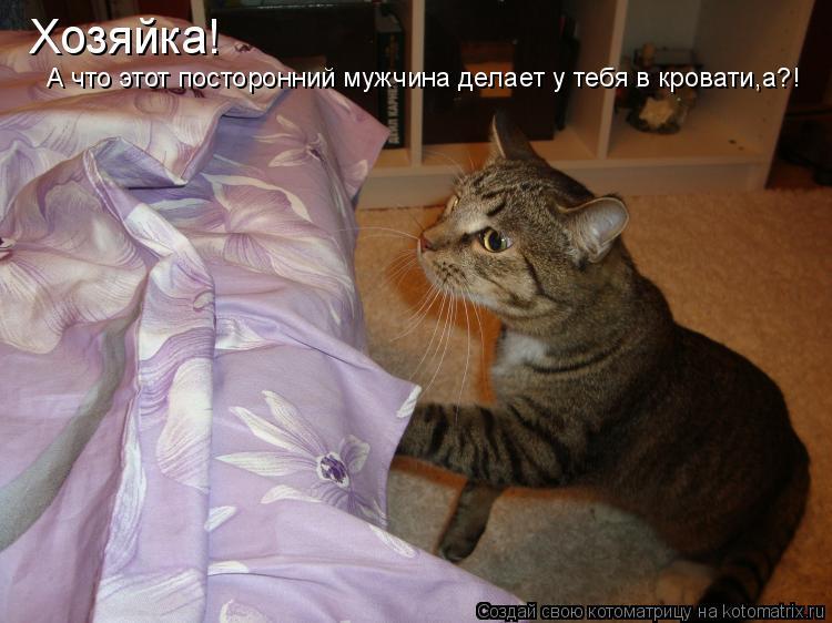 Котоматрица: Хозяйка!  А что этот посторонний мужчина делает у тебя в кровати,а?!