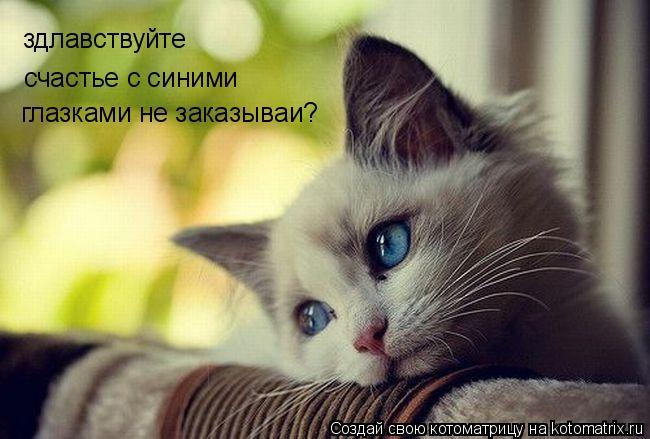 Котоматрица: здлавствуйте счастье с синими  глазками не заказываи?