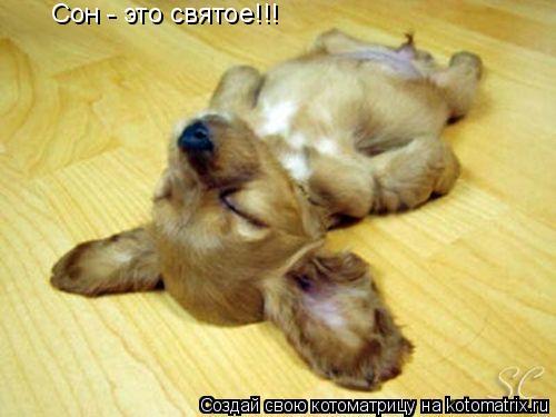 Котоматрица: Сон - это святое!!!