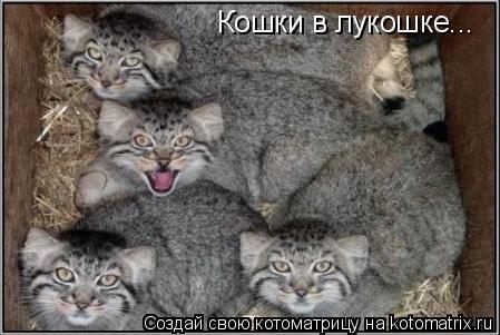 Котоматрица: Кошки в лукошке...