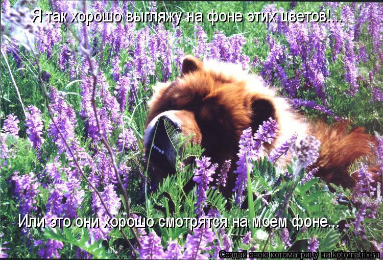 Котоматрица: Я так хорошо выгляжу на фоне этих цветов!... Или это они хорошо смотрятся на моем фоне...