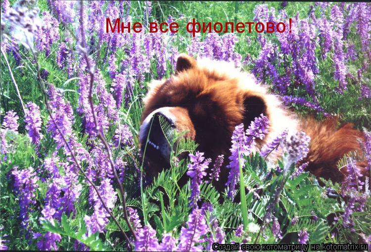 Котоматрица: Мне все фиолетово!