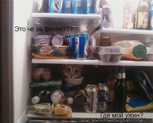 Котоматрица: Это чё за фигня??? Где мой ужин?
