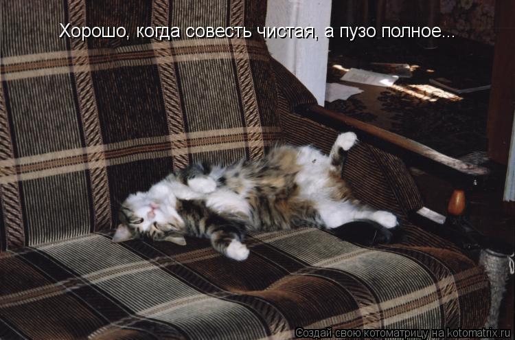 Котоматрица: Хорошо, когда совесть чистая, а пузо полное...