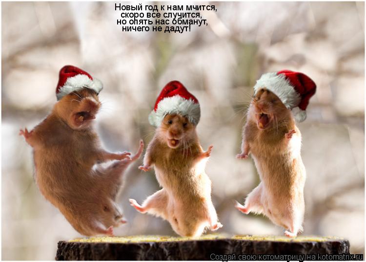 Котоматрица: Новый год к нам мчится,  скоро все случится, но опять нас обманут, ничего не дадут!